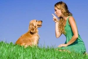 Πότε ξεκινά η εκπαίδευση του σκύλου;