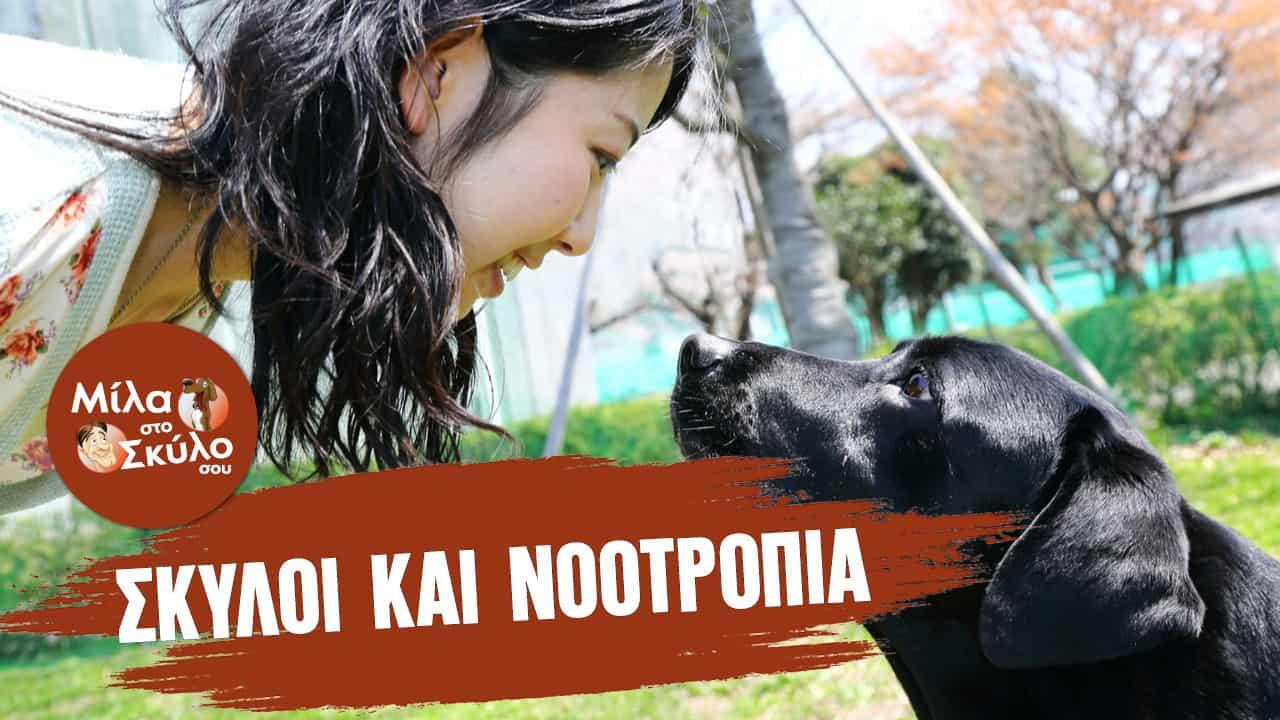 Βίντεο Εκπαίδευσης Σκύλων