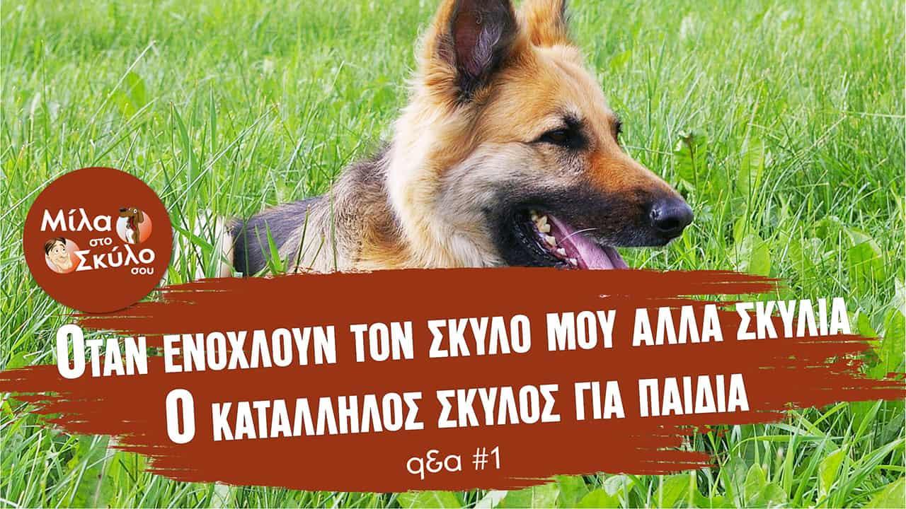 Ο κατάλληλος σκύλος για παιδιά