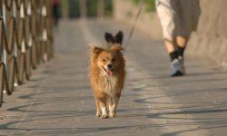Σκύλος και βόλτα