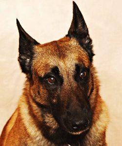 Ψυχολογία - Μίλα στο Σκύλο σου blog