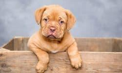 Η ιδανική ηλικία για την εκπαιδευση του σκύλου μας