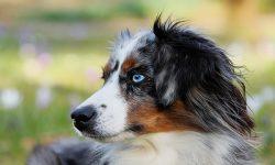 Εκπαίδευση Σκύλου: Κόστος και Αξία