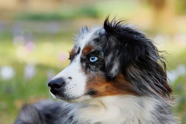 Εκπαίδευση Σκύλου: Κόστος και Αξία - Ψυχολογία σκύλων - Μίλα στο Σκύλο σου