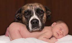 Σκύλοι και μωρά