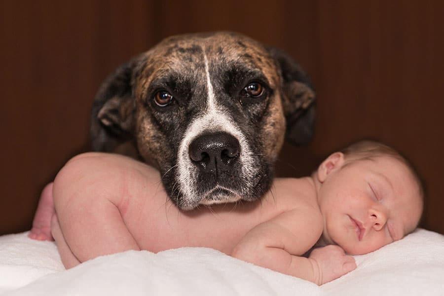 Σκύλοι και μωρά - Εκπαίδευση Σκύλων - Μίλα στο Σκύλο σου