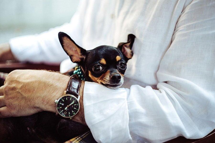 Τα προσόντα του σωστού ιδιοκτήτη - Ψυχολογία σκύλων - Μίλα στο Σκύλο σου