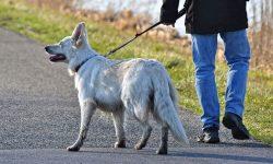 Τι λέει ο Νόμος για τη βόλτα του σκύλου;