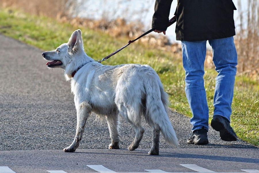 Τι λέει ο νόμος για τη βόλτα του σκύλου