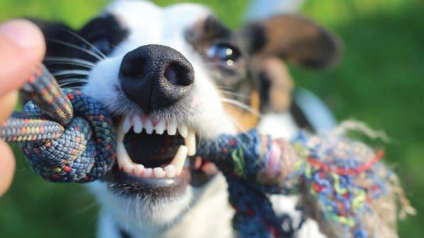 Τι χώρο χρειάζεται ο σκύλος μου; - Ψυχολογία σκύλων - Μίλα στο Σκύλο σου