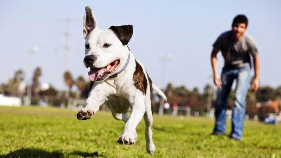 Να στείλω τον σκύλο μου για εκπαίδευση; - Θετική εκπαίδευση σκύλων