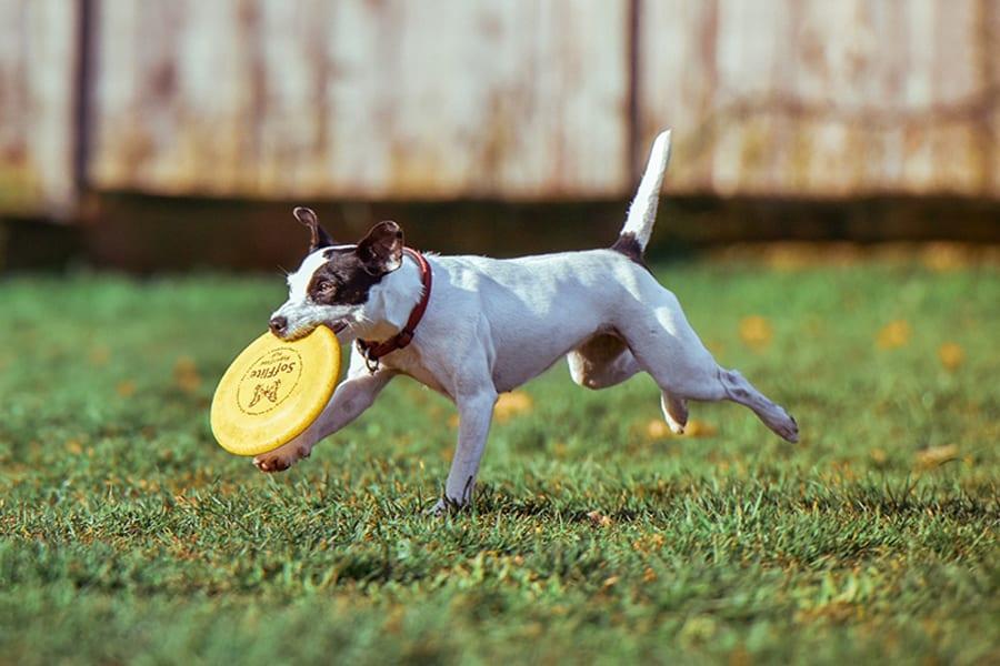 Σκύλος και κούνημα ουράς - Ψυχολογία σκύλων - Μίλα στο Σκύλο σου