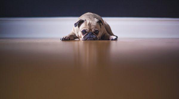 Άγχος αποχωρισμού - Ψυχολογία σκύλων - Μίλα στο Σκύλο σου
