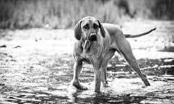 Σκύλος και κούνημα ουράς