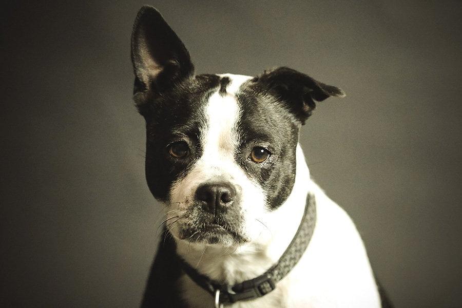 Στο μυαλό του σκύλου - Ψυχολογία - Μίλα στο Σκύλο σου blog
