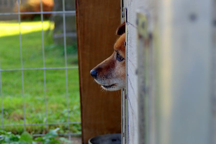 Ζώα μόνο από καταφύγια στην Καλιφόρνια - Μίλα στο Σκύλο σου - Επικαιρότητα