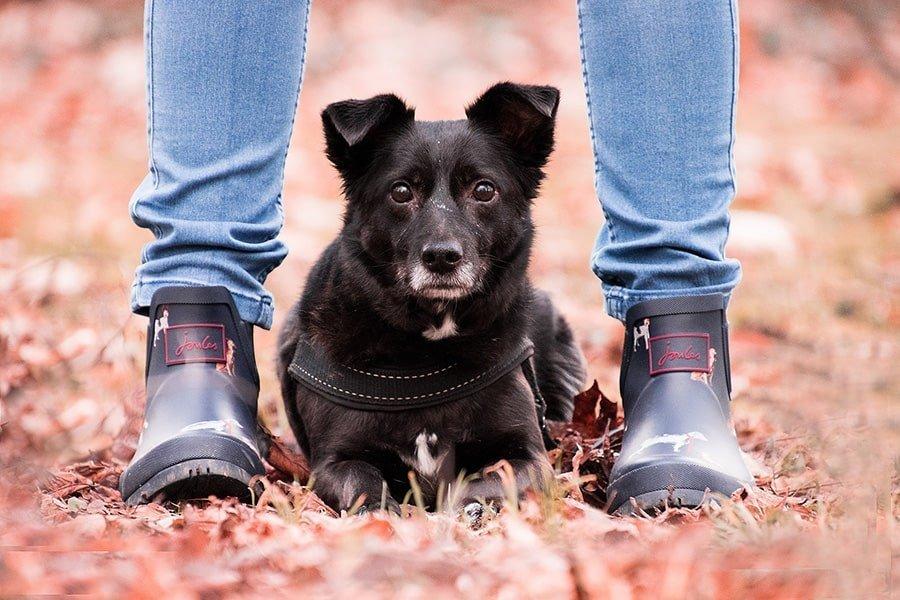 Βασική Υπακοή - Εκπαίδευση - Μίλα στο Σκύλο σου