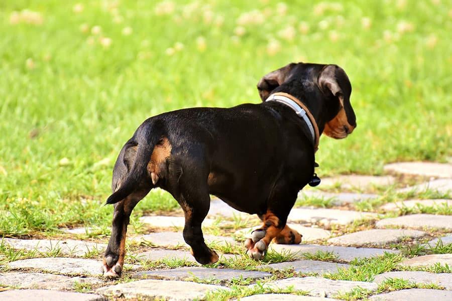 Φεύγει όταν το φωνάζετε; - Εκπαίδευση Σκύλων Κέρκυρα - Μίλα στο Σκύλο σου
