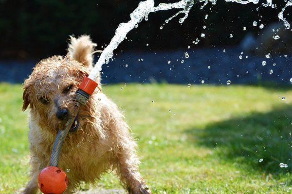 Πότε θα ηρεμήσει ο σκύλος μου; Ψυχολογία σκύλων - Μίλα στο Σκύλο σου