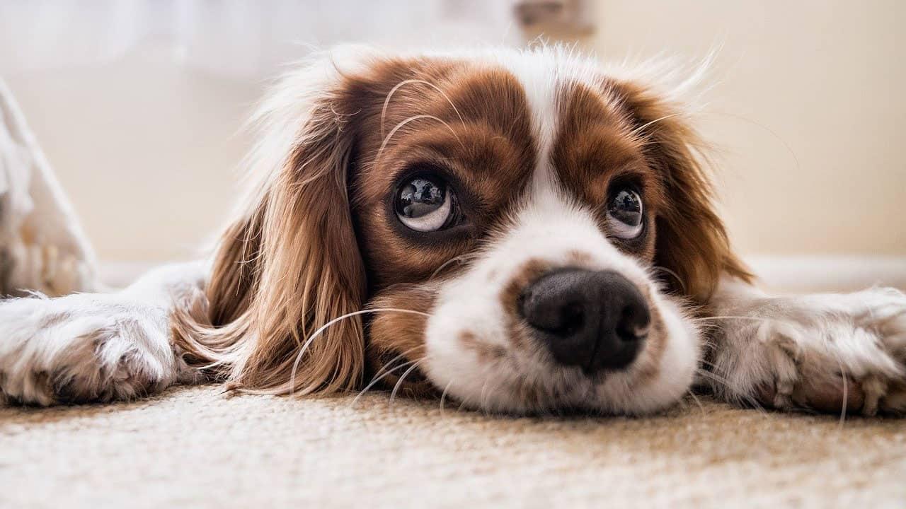 Ο σκύλος δεν ακούει - Θετική Εκπαίδευση Σκύλων