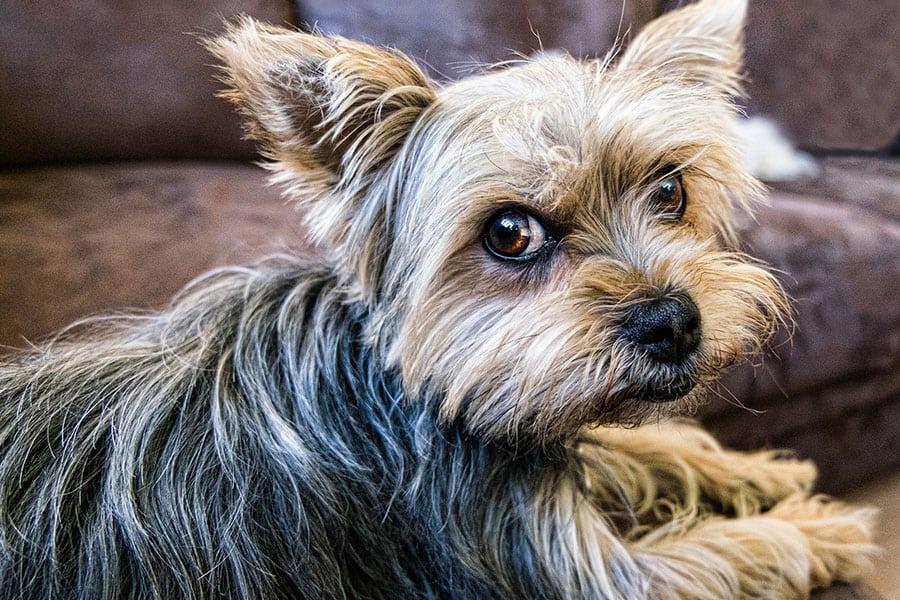 Μικρόσωμα σκυλιά - Θετική Εκπαίδευση Σκύλων