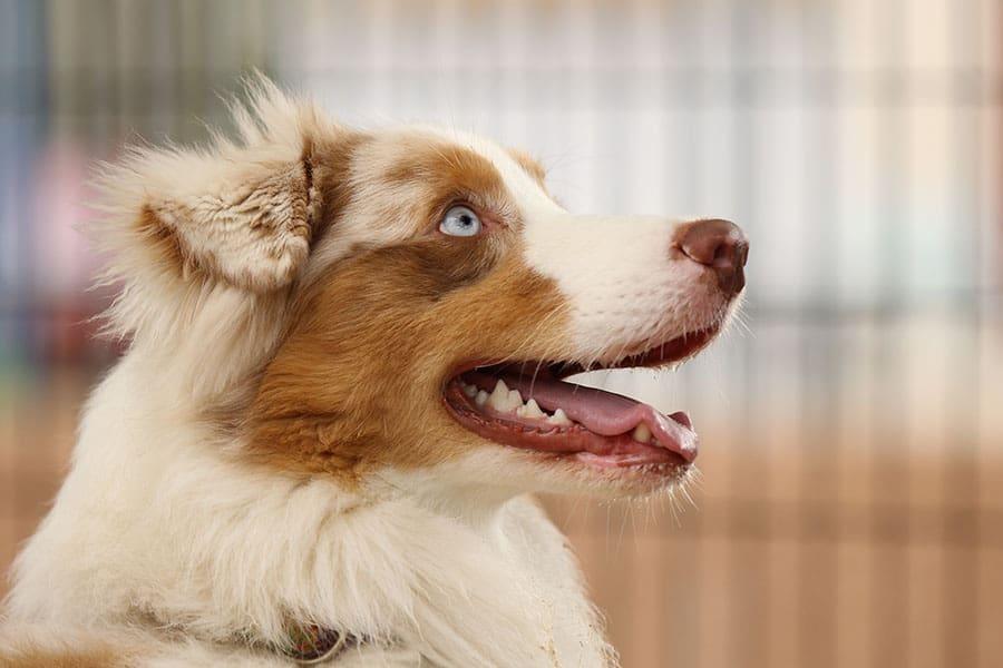 Οι υπερδυνάμεις των σκύλων - Ψυχολογία σκύλων - Μίλα στο Σκύλο σου