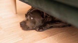 Παράνομη η απαγόρευση κατοικιδίων στις πολυκατοικίες - Επικαιρότητα - Μίλα στο Σκύλο σου