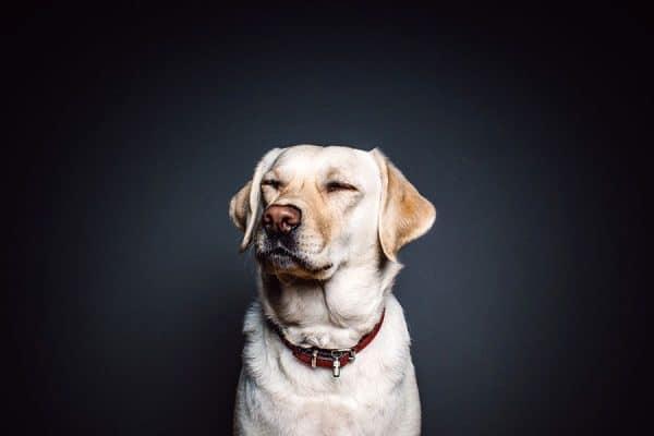 Οι υπερδυνάμεις των σκύλων Ψυχολογία σκύλων - Μίλα στο Σκύλο σου