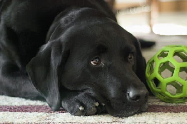 Διόρθωση Προβληματικών Συμπεριφορών Σκύλου