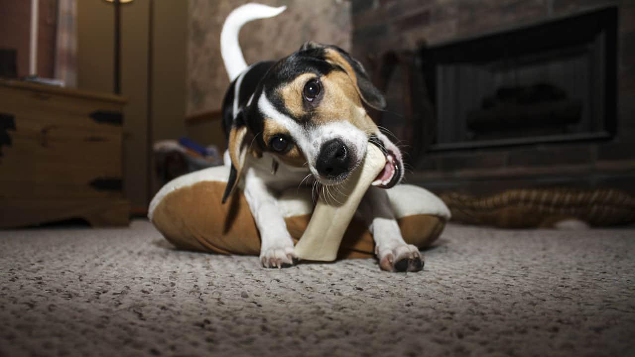 Σκύλοι και κόκκαλα - Μίλα στο Σκύλο σου - Υγεία