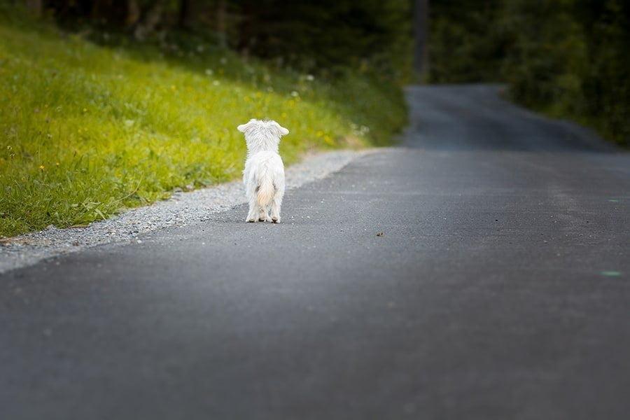 Αντίδραση σε περιστατικά κακοποίησης - Μίλα στο Σκύλο σου - Επικαιρότητα