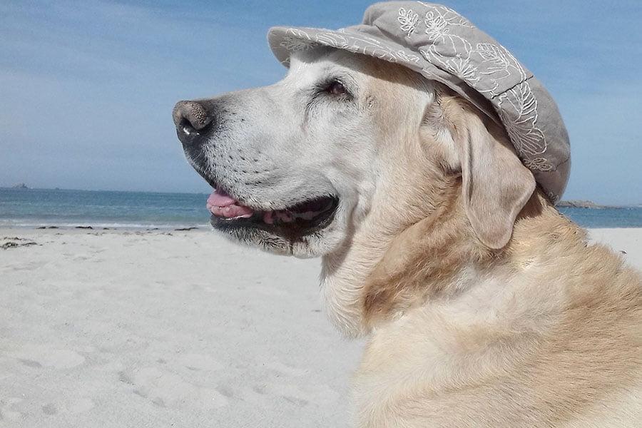 Σκύλος και καλοκαίρι - Μίλα στο Σκύλο σου - Υγεία