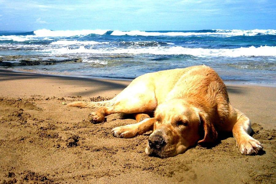 Σκύλος και παραλία - Μίλα στο Σκύλο σου - Επικαιρότητα