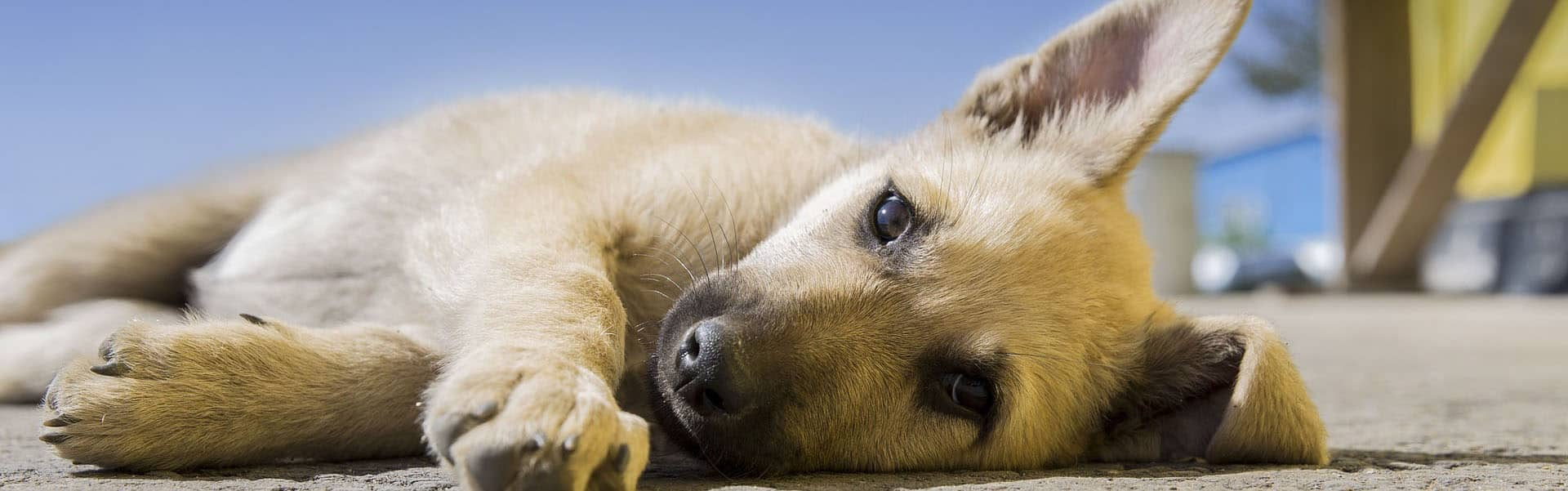 Θετική Εκπαίδευση Σκύλων - Άρθρα
