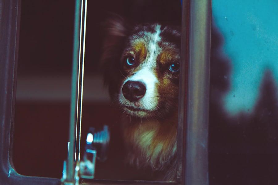 Μεταφορά ζώων με το ΚΤΕΛ - Μίλα στο Σκύλο σου - Επικαιρότητα