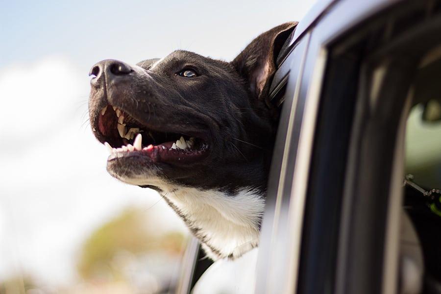 Τι κάνει έναν σκύλο ευτυχισμένο; - Μίλα στο Σκύλο σου