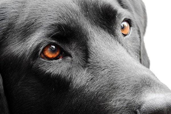 Κοίταξέ με στα μάτια - Ψυχολογία σκύλων - Μίλα στο Σκύλο σου