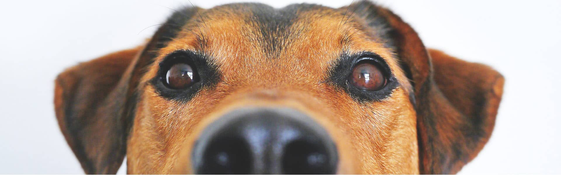 Ψυχολογία Σκύλων - Άρθρα