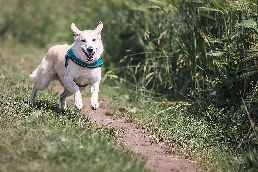 Συμβουλές για τη μακροζωΐα του σκύλου σας - Μίλα στο Σκύλο σου - Υγεία