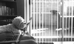 Σκύλοι και διαδίκτυο