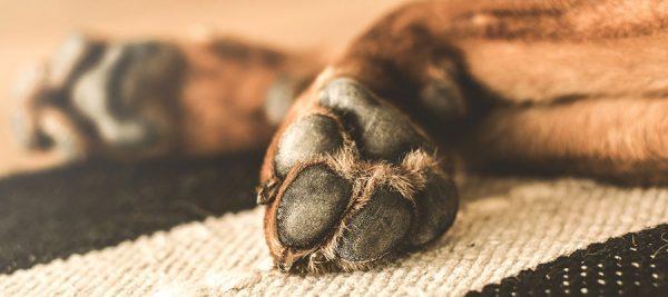 Η φιλοσοφία της εκπαίδευσης σκύλων