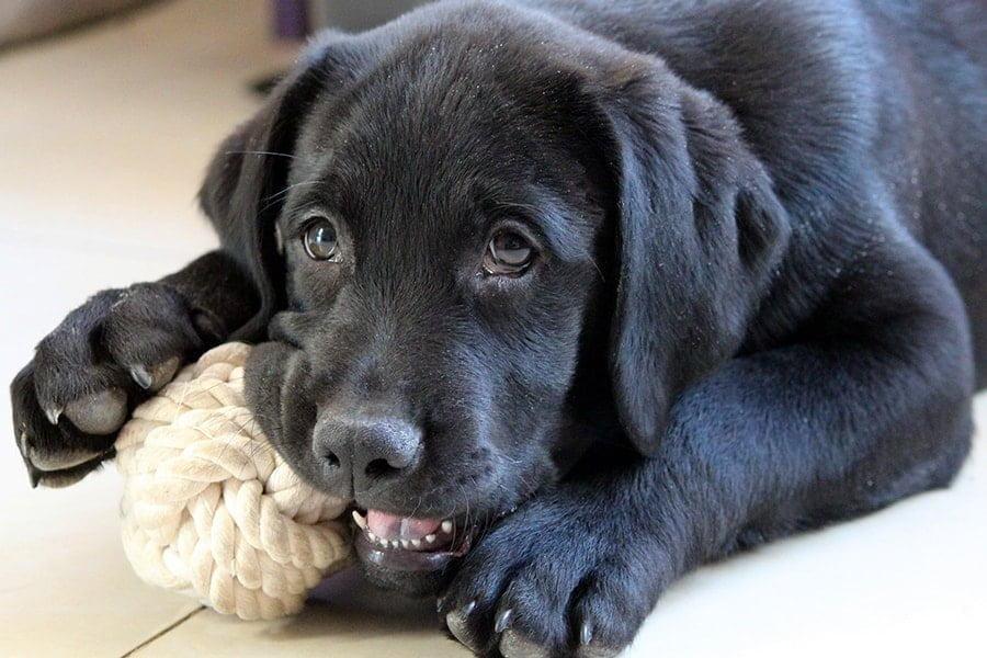 Τι κάνει έναν σκύλο ευτυχισμένο - Μίλα στο Σκύλο σου