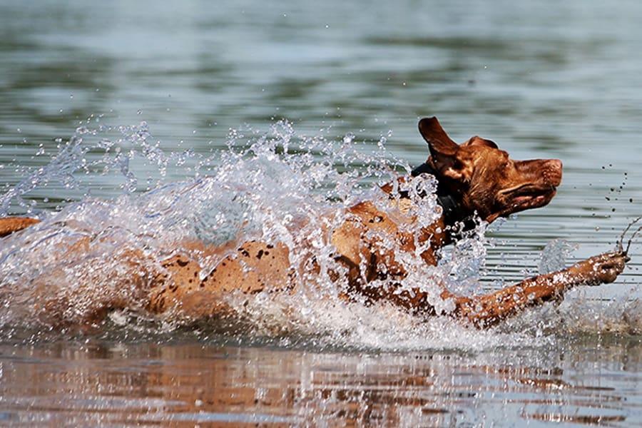 Τετράποδοι κολυμβητές - Μίλα στο Σκύλο σου - Υγεία