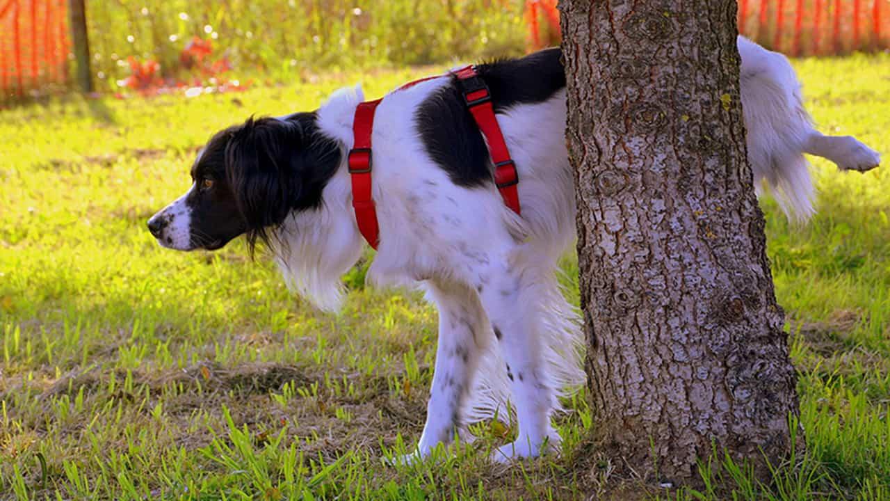 Σκύλος και τουαλέτα - Θετική Εκπαίδευση Σκύλων