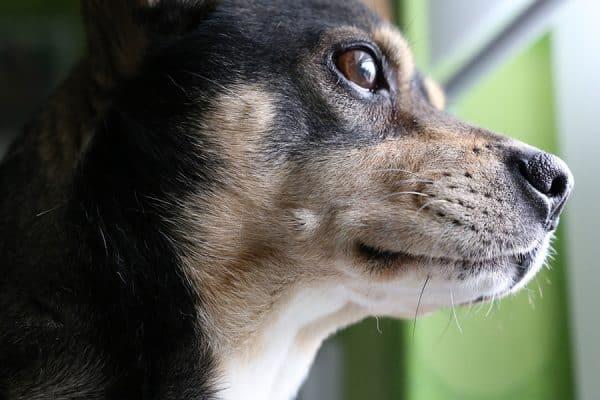 Σκύλοι και ανεπτυγμένη αίσθηση δικαιοσύνης - Ψυχολογία Σκύλων - Μίλα στο Σκύλο σου