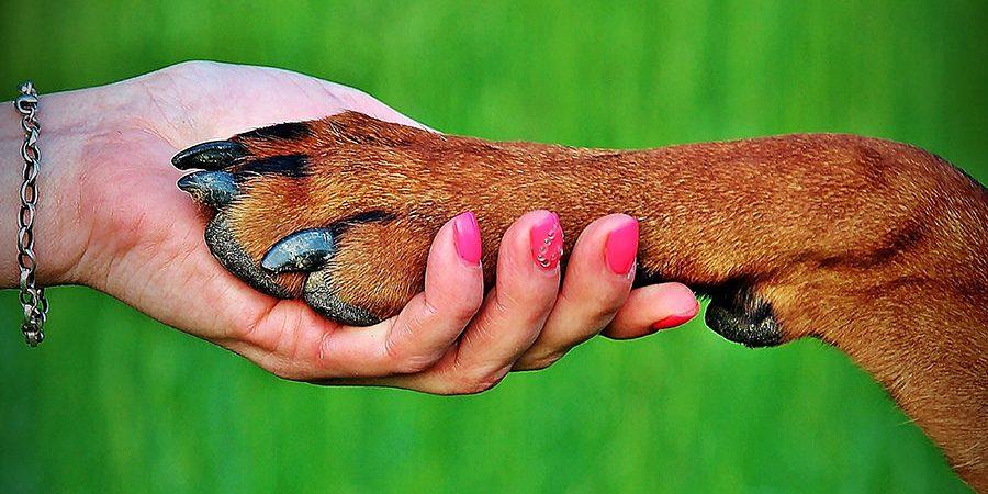 Εκπαίδευση Σκύλου και Ιδιοκτήτη - Μίλα στο Σκύλο σου