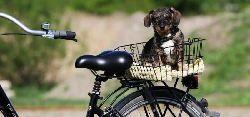 Αντιμετώπιση ανεπιθύμητων συμπεριφορών - Μίλα στο Σκύλο σου