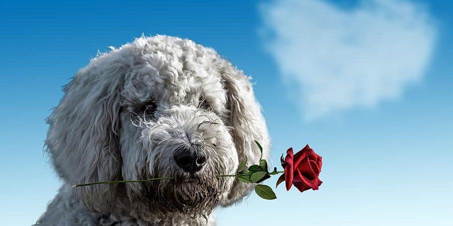 Dog and owner's training - Positive Dog Training Corfu