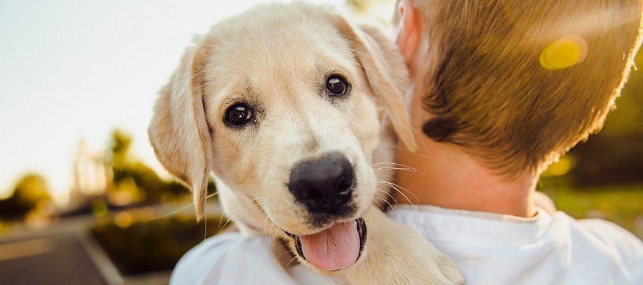 Τα βήματα της εκπαίδευσης του σκύλου