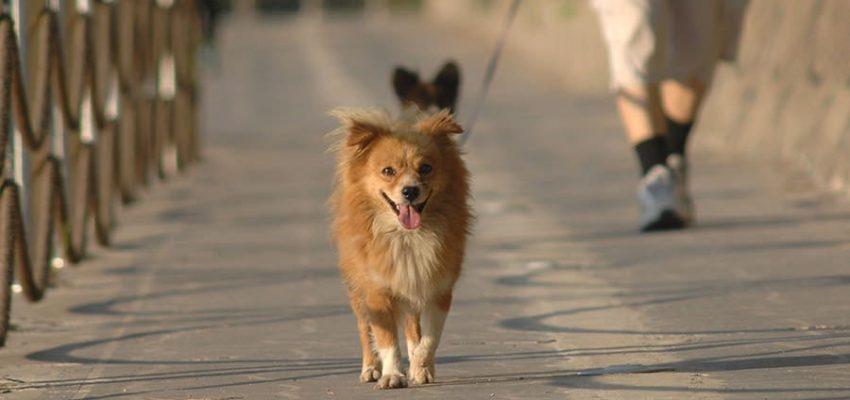Σκύλος και βόλτα - Θετική Εκπαίδευση Σκύλων Κέρκυρα